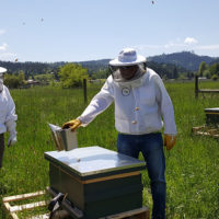 Beekeepers huddle around a long hive