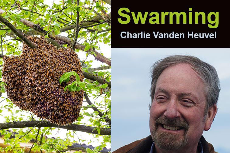 Charlie Vanden Heuvel talks about Swarming